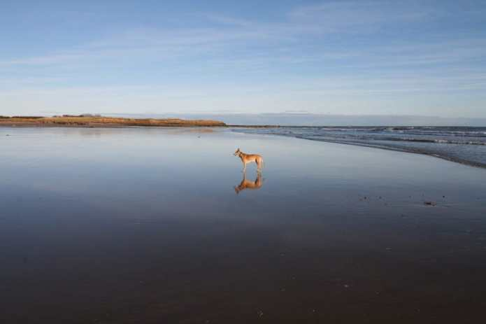 Blog07 Dogs Enjoying the Beach 09