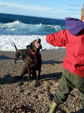 Blog07 Dogs Enjoying the Beach 10