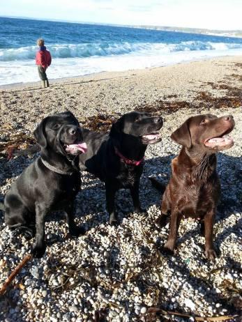 Blog07 Dogs Enjoying the Beach 11