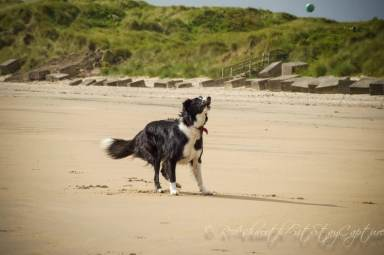 Blog07 Dogs Enjoying the Beach 14