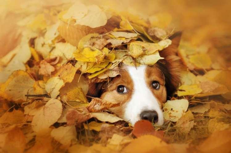 Blog041 Dogs Love Autumn 01