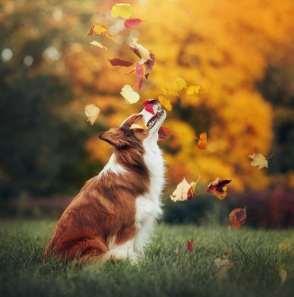 Blog041 Dogs Love Autumn 02
