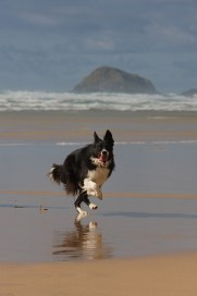 Dog on perranporth beach