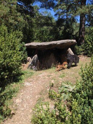 Resto prehistóricos