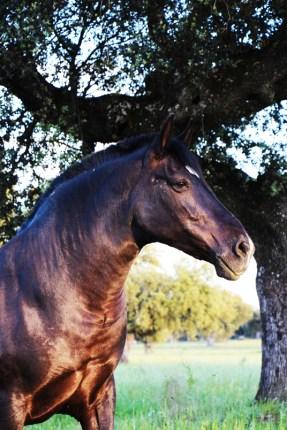 Uno de los caballos de la finca.