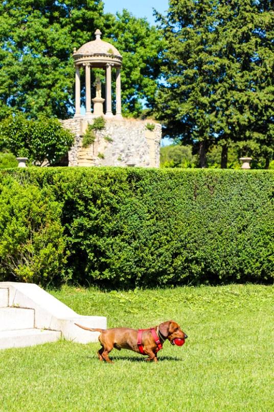 Eros jugando con su KONG en el Jardín Francés.