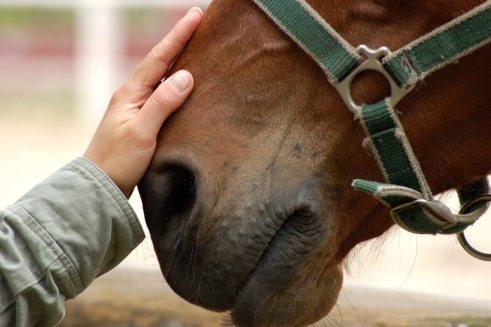 Una relación muy especial. Foto: The British Horse Society.