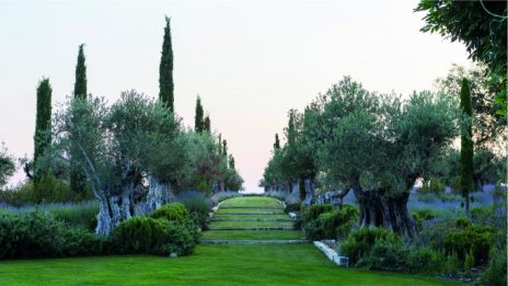 Paseo de los olivos.