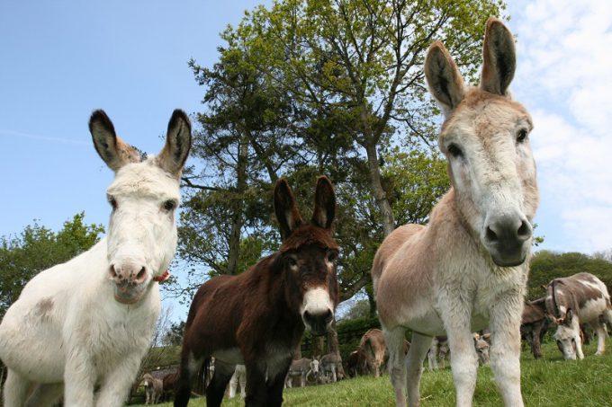 Un santuario que merece una visita. Foto: The Donkey Sanctuary.