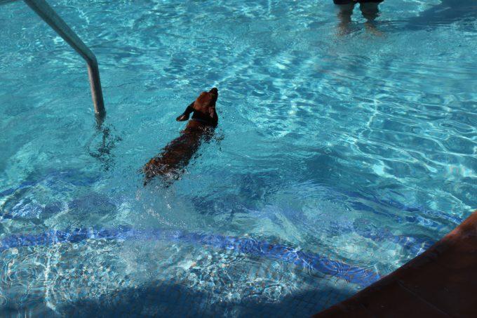 ¡Al agua perro!