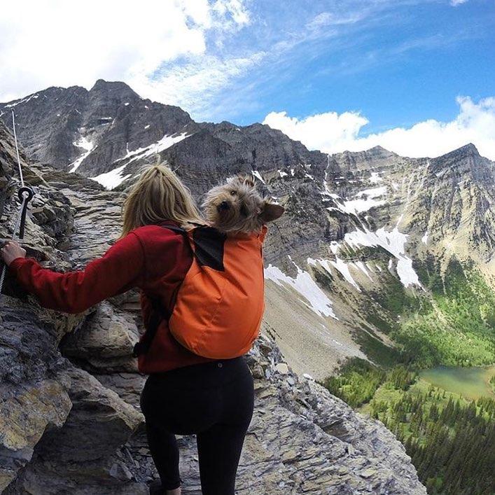 Yorkshire escalando con su madre.