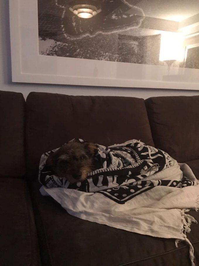 Como una maharani, Bella descansa en Nueva York.