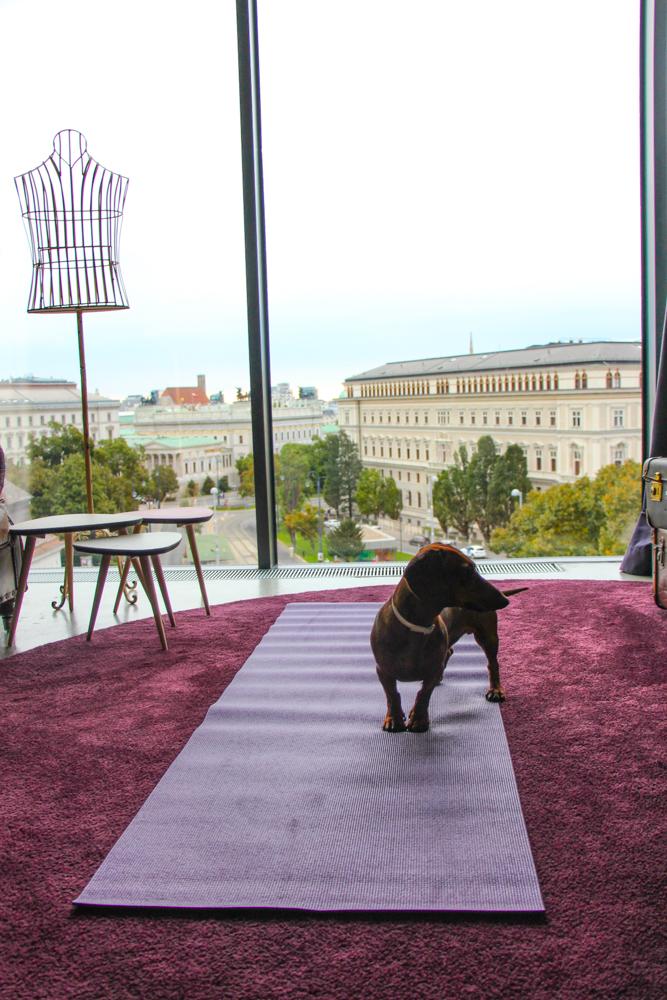 Mant para hacer yoga en la habitación y mirando a Viena.