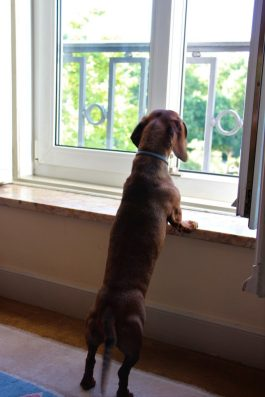 Contemplando las vistas fabulosas desde nuestro cuarto.