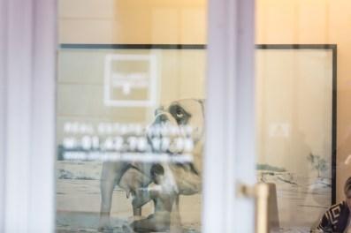 En la entrada de una inmobiliaria, un Bulldog es ordeñado por un Adán.