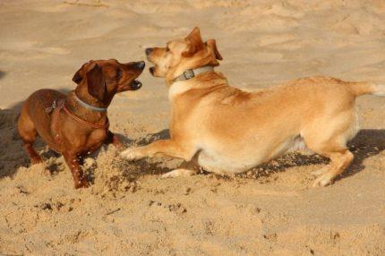 playa dog friendly