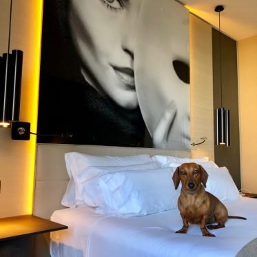 Eros en nuestra habitación premium.