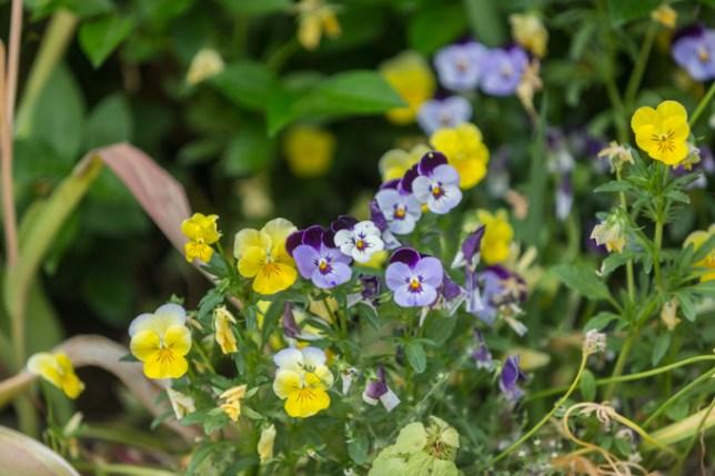 Flores que cuida Toñi, la propietaria del hotel.