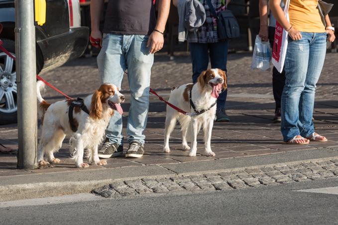 Los pasos de peatones y los semáforos son respetados por peatones y vehículos.
