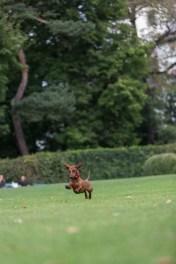 Eros corriendo detrás de una castaña.