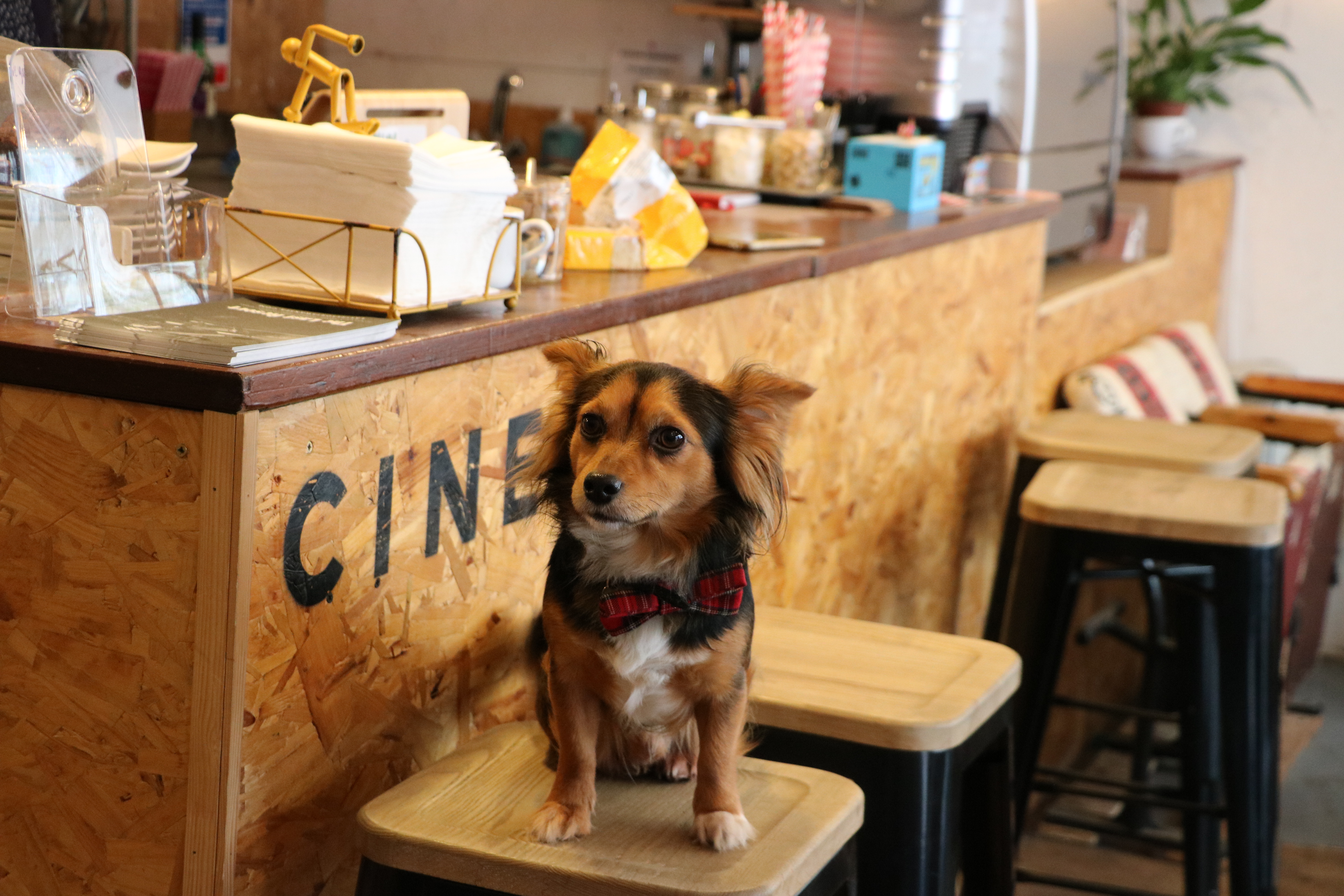 Wales' First Dog Friendly Cinema is Coming to Swansea