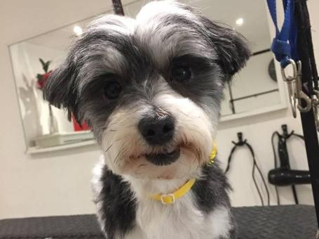 Perfect Dog Grooming Centre