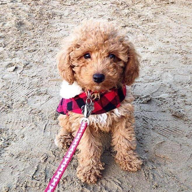 Bongo's Top Three Beaches in South West Wales - Dog Furiendly