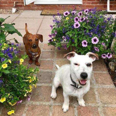 Creating a Dog Friendly Garden At Home - Dog Furiendly