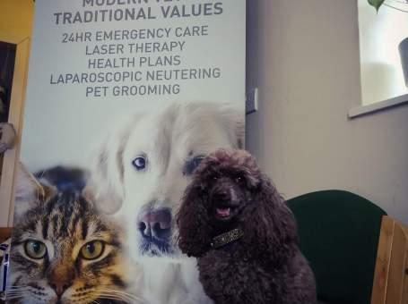 Murphy & co veterinary practice