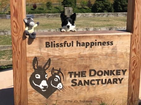 The Donkey sanctuary – Sidmouth
