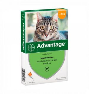 Advantage Gatos – 4 Pipetas