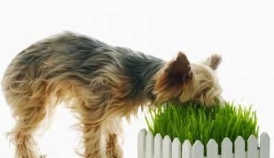 Чем кормить собаку?!