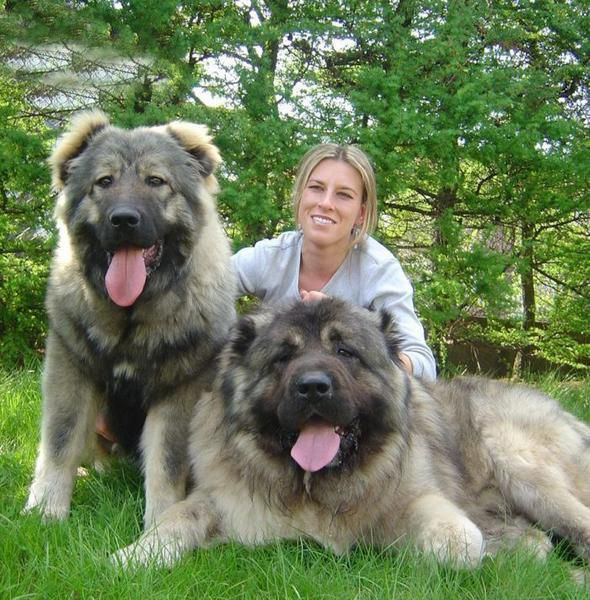 Giant Caucasian Shepherd