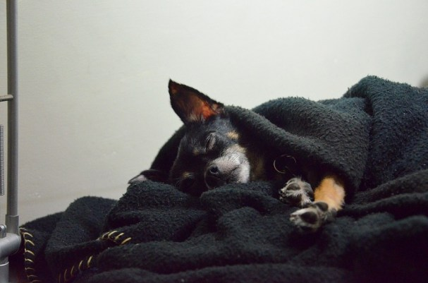 dog sleeping in blanket