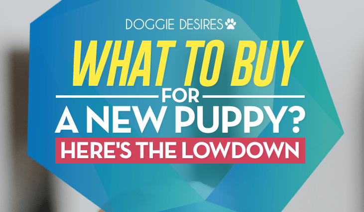 what to buy for a new puppy?