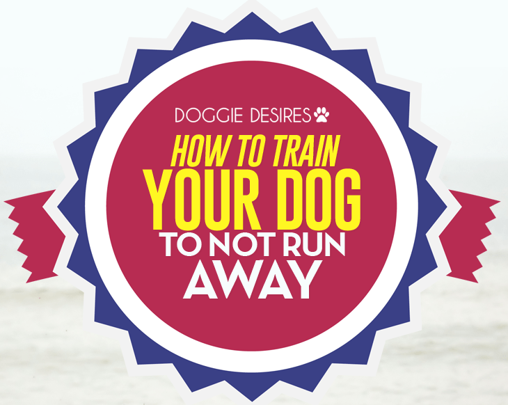 how to train your dog to not run away