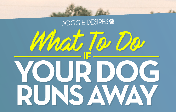 what to do if your dog runs away
