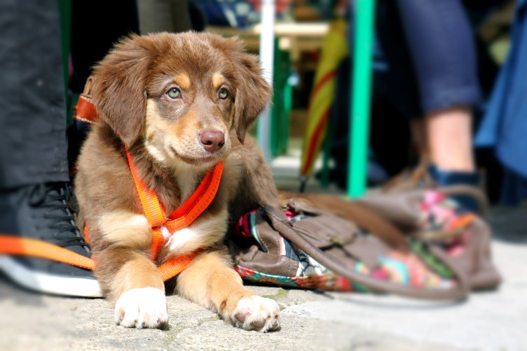 training dog with full-time job