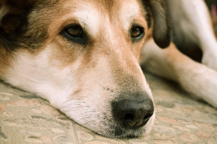 Remedies for Dogs Dry Itchy Skin