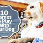 10 Games To Play With Your Dog
