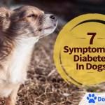 7 Symptoms of Diabetes in Dogs