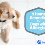 9 Home Remedies for Dogs with Allergies