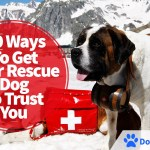 10 Ways To Get Your Rescue Dog To Trust You