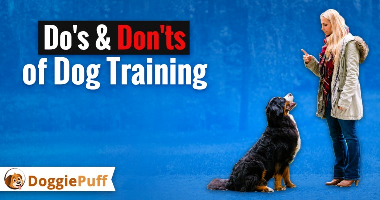 Dog Training Do's and Don'ts