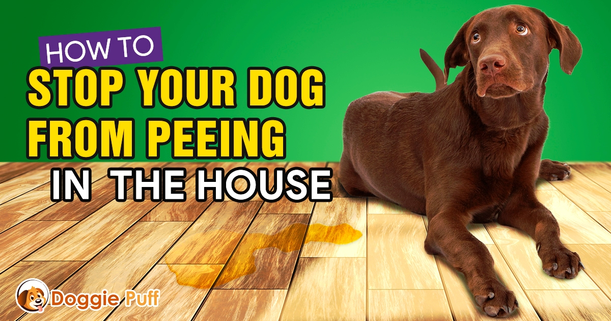 How To Stop Your Dog From Peeing In The House Www Doggiepuff Com