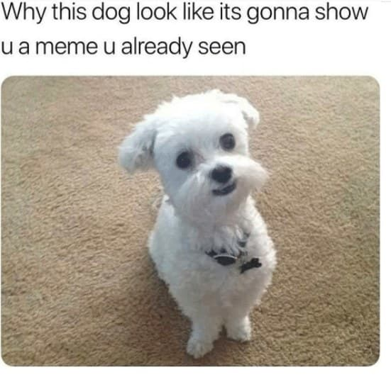 24 Dog Memes That Will Always Make Us Laugh