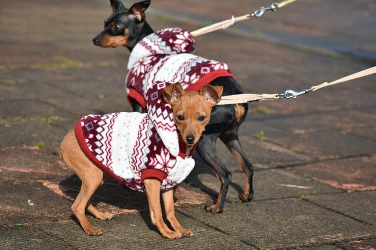 5 of the most fun things to do in dog friendly savannah, gadogs on walking tour in dog friendly savannah, ga