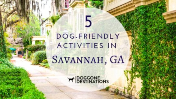5 of the most fun things to do in dog friendly savannah, ga