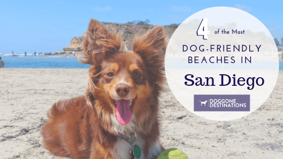 5 of the most fun things to do in dog friendly savannah, ga4 of the absolute best dog friendly beaches in san diego, ca