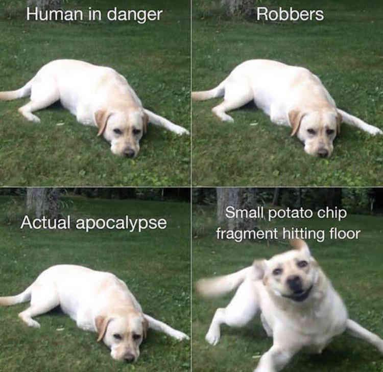 Dog Running Away Meme Dunia Belajar